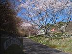 IMG_0270さくら公園.JPG
