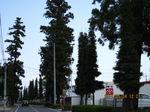 IMG_0747杉並木.JPG