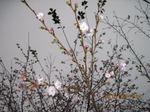 IMG_2604桜.JPG