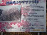 IMG_8457ヤマザクラ.JPG