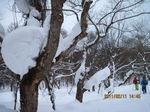 IMG_9187雪.JPG